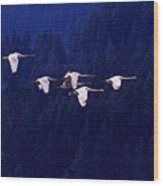 Flight Of The Swans Wood Print