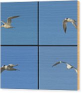 Flight Of The Tern Collage Wood Print