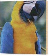 Flirtacious Macaw Wood Print