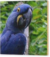 Flirty Birdy Wood Print