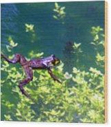 Floating Frog Wood Print