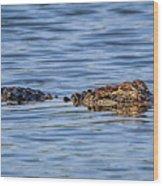 Floating Gator Wood Print