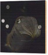 Floating In Deep Space Wood Print by Stephanie Varner