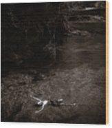 Floating In Light Wood Print by Scott Sawyer