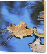 Floating On The Reflected Sky Wood Print