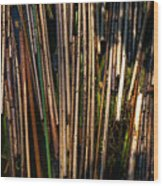Floating Reeds Wood Print