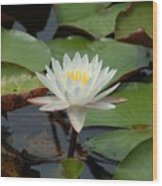 Floating Water Lilly Wood Print
