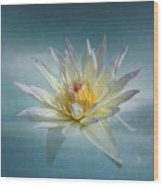 Floating Water Lily Wood Print