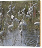 Flock Of Different Types Of Wading Birds Wood Print