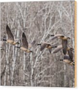 Flock Of Geese Wood Print