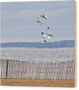Flock Of Gulls Wood Print