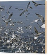 Flock Of Seagulls In The Sea And In Flight Wood Print by Sami Sarkis