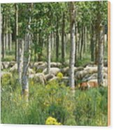 Flock Of Sheep With A Goat Wood Print