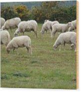 Flock Of Sheeps Wood Print