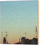 Flock Of Swallows Flying Over Rooftops At Sunset During Fall Wood Print