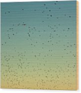 Flock Of Swallows Flying Together At Sunset Wood Print