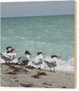 Flock Of Terns Gp Wood Print