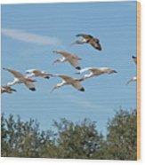 Flock Of White Ibises Wood Print