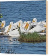Flock Of White Pelicans Wood Print