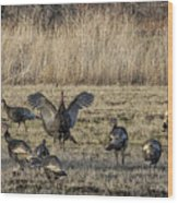 Flock Of Wild Turkeys Wood Print