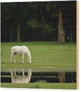 Flooded Field In May Wood Print