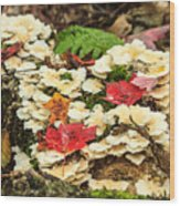 Floor Of The Forest In Fall Wood Print