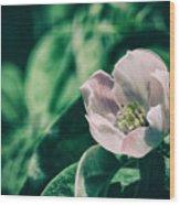 Flora 2821 Wood Print