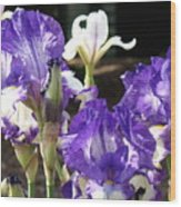 Flora Bota Irises Purple White Iris Flowers 29 Iris Art Prints Baslee Troutman Wood Print