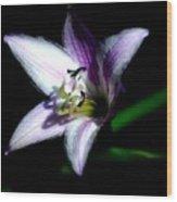 Floral 7-24-09 Wood Print