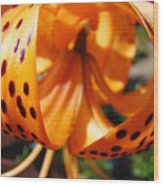 Floral Abstracts Art Prints Summer Tiger Lily Baslee Troutman  Wood Print