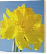 Floral Art Bright Yellow Daffodil Flowers Baslee Troutman Wood Print