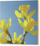Floral Art Daffodil Flowers Spring Prints Blue Sky Baslee Troutman Wood Print