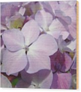 Floral Art Hydrangea Flowers Purple Lavender Baslee Troutman Wood Print