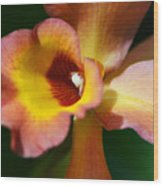 Floral Art - Intimate Orchid 3 - Sharon Cummings Wood Print