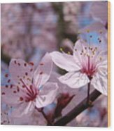 Floral Art Pink Spring Blossoms Prints Blue Sky Baslee Troutman Wood Print