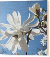 Floral Art Print Landscape Magnolia Tree Flowers White Baslee Troutman Wood Print
