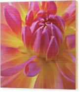 Floral Art Prints Dahlia Flower Giclee Artwork Baslee Troutman Wood Print