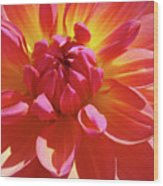 Floral Art Prints Orange Pink Dahlia Flower Baslee Troutman Wood Print