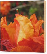Floral Art Prints Orange Rhodies Rhododendrons Baslee Troutman Wood Print