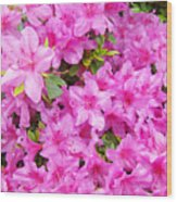Floral Art Prints Pink Azalea Garden Landscape Baslee Troutman Wood Print