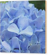 Floral Artwork Blue Hydrangea Flowers Baslee Troutman Wood Print