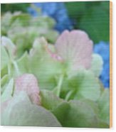 Floral Artwork Hydrangea Flowers Soft Nature Giclee Baslee Troutman Wood Print
