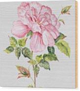 Floral Botanicals-jp3779 Wood Print