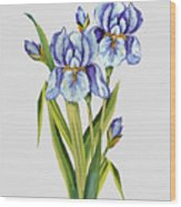 Floral Botanicals-jp3786 Wood Print