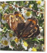 Floral Buckeye Wood Print
