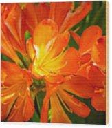 Floral Burst Wood Print