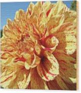 Floral Dahlia Flower Art Print Orange Red Dahlias Baslee Wood Print