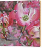 Floral Dogwood Tree Flowers Baslee Troutman Wood Print