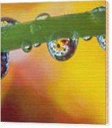 Floral Drop Trio  8054 Wood Print