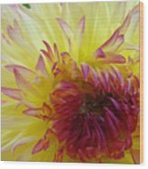 Floral Fine Art Dahlia Flower Yellow Red Prints Baslee Troutman Wood Print